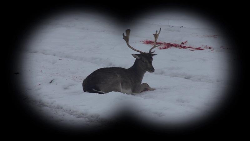 lovu_zdar_tz